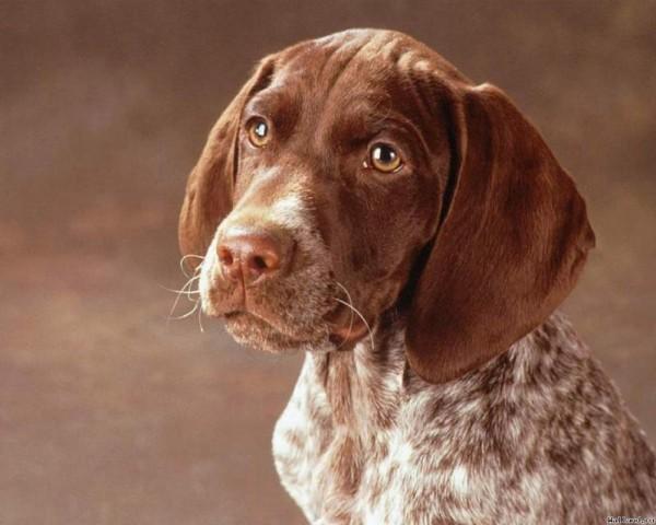 <center><b>Выбрали лучшую собаку в США</center></b>