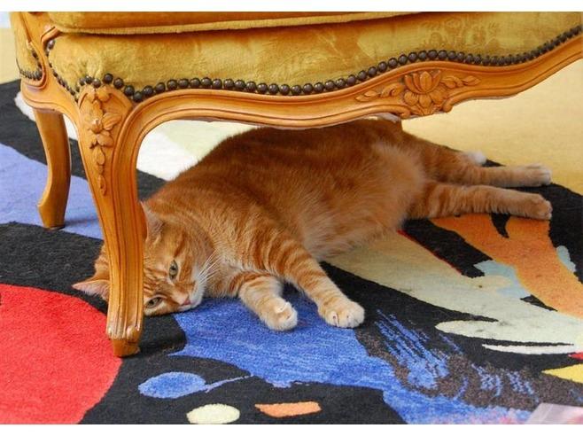 <center><b>На работу в отель Казахстана требуется кот</center></b>