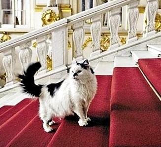 В Эрмитаже появится кот-президент