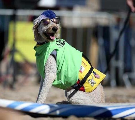 Собачий сёрфинг в Калифорнии