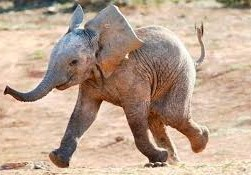 <center><b>В Магнитогорске гуляли слоны</center></b>