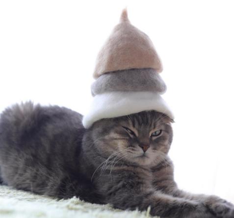 Коты в шапках из кошачьей шерсти