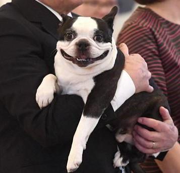 Собака финского президента стала звездой