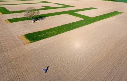 Фермер оставил послание на поле пшеницы