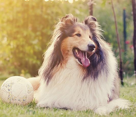 Собака поиграла с футболистами в Колумбии (видео)