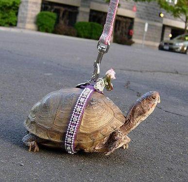 <center><b>В Штатах на работу взяли няню для черепахи</center></b>
