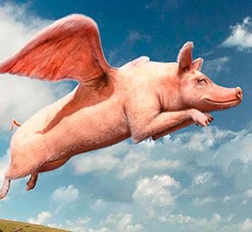 В Тюмени продают «свиные крылышки»