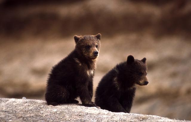 <center><b>Китаец перепутал медвежонка с щенком</center></b>