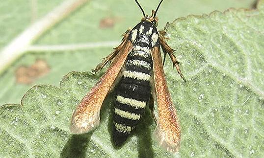 В Крыму нашли новый вид насекомых