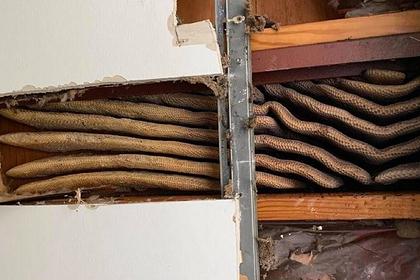 В Штатах пчелы построили улей прямо в многоэтажке