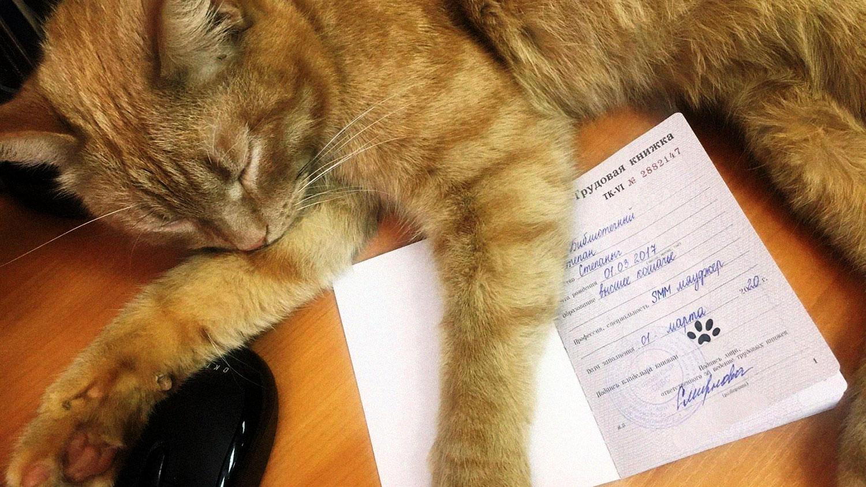 Тверской кот устроился на работу в библиотеку