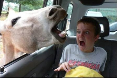 <center><b>Люди ссорятся из-за призрака лошади</center></b>