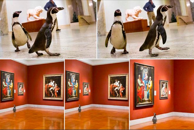 Пернатые обитатели зоопарка сходили на экскурсию в музей