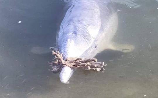 Дельфин уговаривает людей вернуться в море с помощью подарков