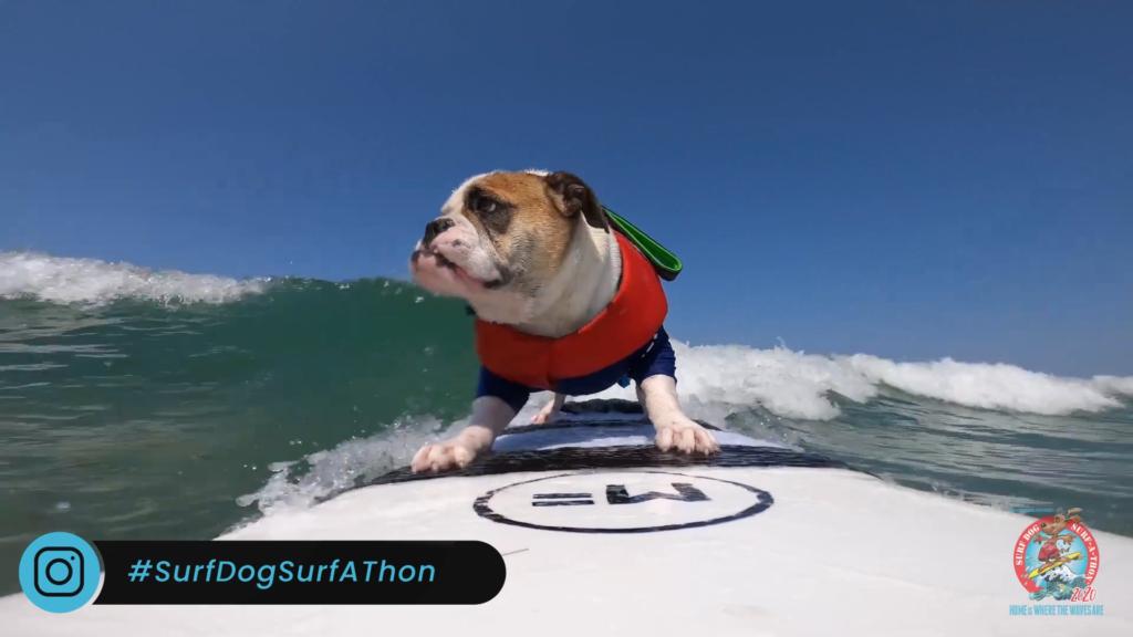 В Калифорнии прошел конкурс собак-серфингистов