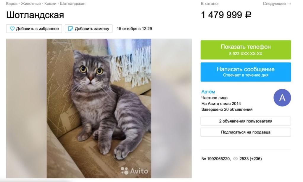 Россиянам предложили кошку за 1,5 миллиона рублей