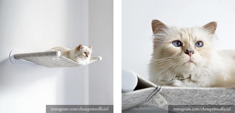 Кошка дизайнера сама стала дизайнером