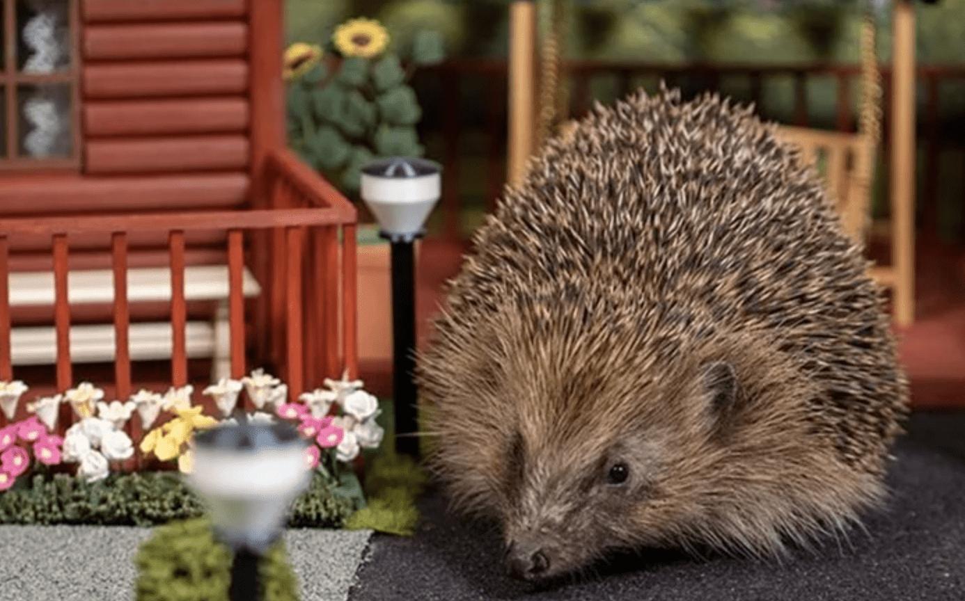 В Британии построили парк отдыха для ежей