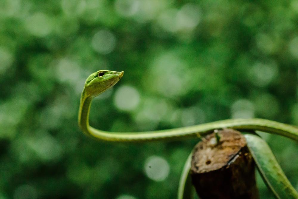 Новый вид змей назвали в честь героя «Футурамы»