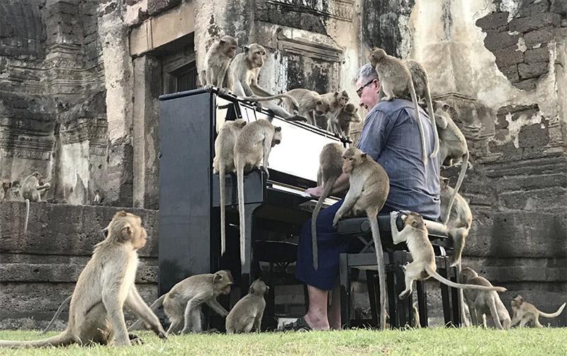 Пианист забрался в джунгли, чтобы порадовать макак произведениями Бетховена