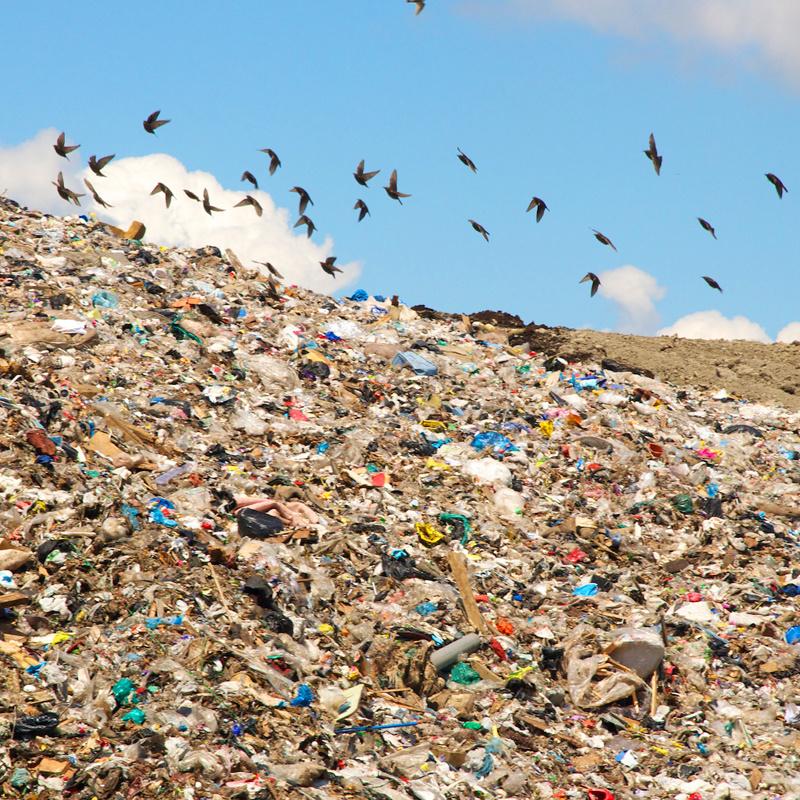 <center><b>Любительница мусора собралась во власть</center></b>