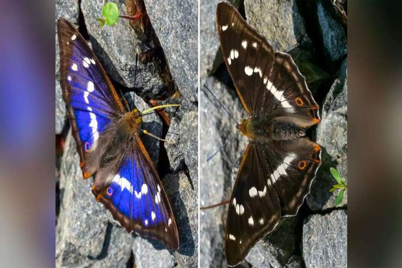 Бабочка раздора появилась в соцсетях