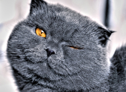 <center><b>В Новой Зеландии живет кошка-клептоманка</center></b>