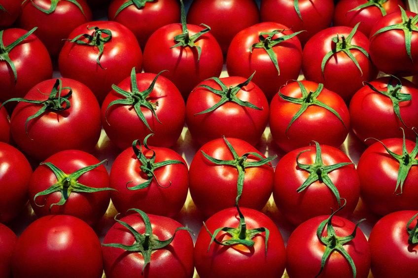 Англичанин установил мировой рекорд, посадив куст помидоров