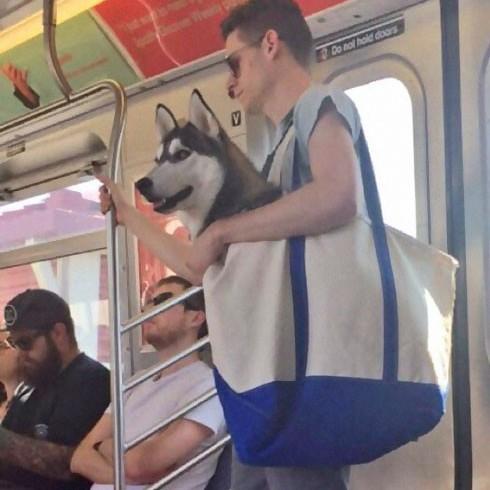 <center><b>В Нью-Йорке носят собак в сумках</center></b>